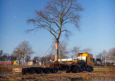Nieuwe locatie voor Tamme kastanje in Bedrijvenpark Ambachtsezoom